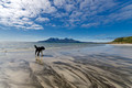 beach dog laig beach eigg