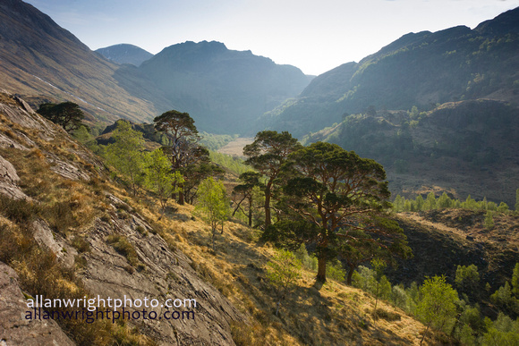 rugged tree clad glen nevis by fort william