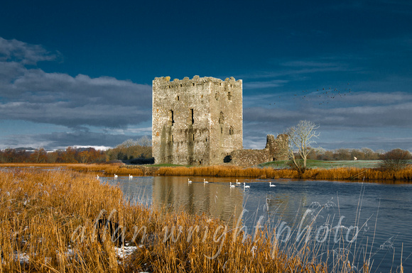 Threave Castle with dramatic dark and swans swimming past