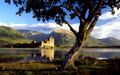 kilchurn castle with alder tree